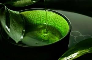 absinthe,wirkung,grüne,fee